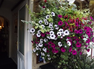 Flowers/Front of Hotel