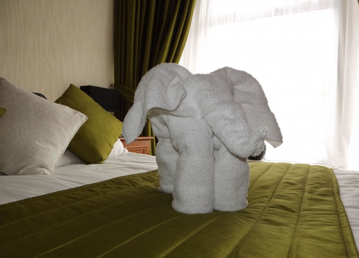 Superior Family Room #5 - Elephant Towel